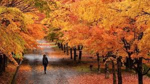 Mengenal Musim di Jepang