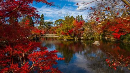 5 Hal Tentang Musim Gugur di Jepang