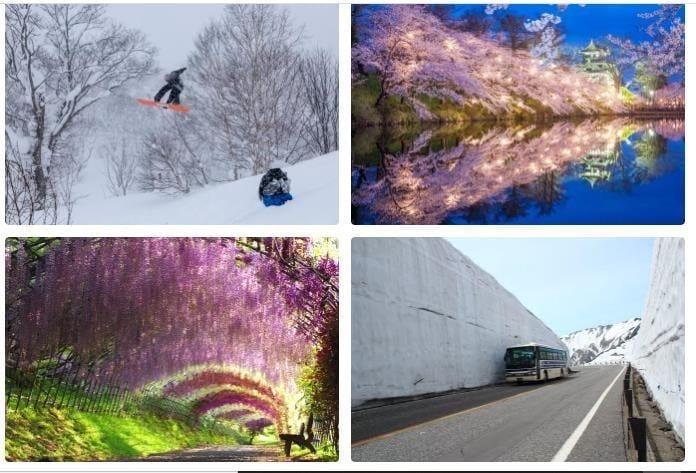 Musim Semi di Jepang Berarti Hamparan Hijau, Bunga Sakura, dan Cuaca yang Sempurna